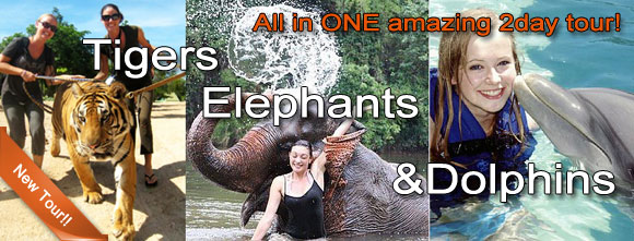 Amzing New 2 Day Tour with Elephants Tigers and Dolphins!