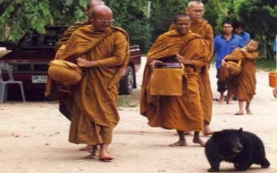 Tiger Temple taking bear for a walk