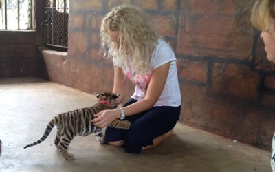Play with Tiger Cubs