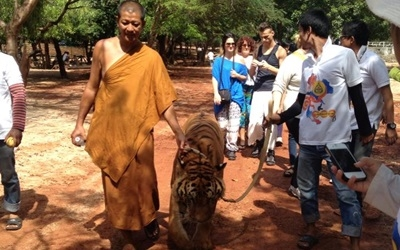 Walk with Tigers