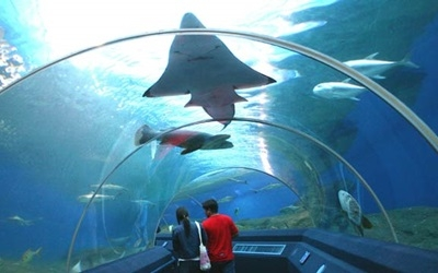 Walk through aquarium