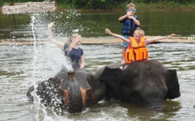 Bath swim trk elephants