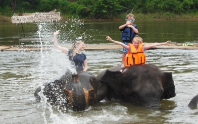 Training and swimming with elephants