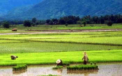Pass by paddy fields