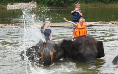 Training elephants to swim