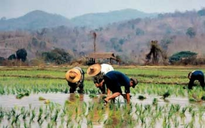 Country rice paddy fields
