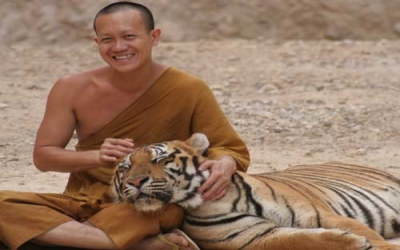 Tiger Temple Monk with Tiger