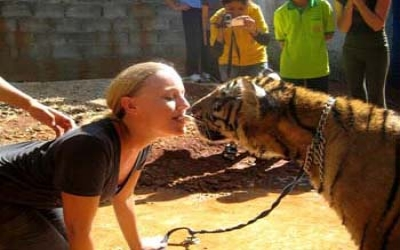 Kissing a tiger
