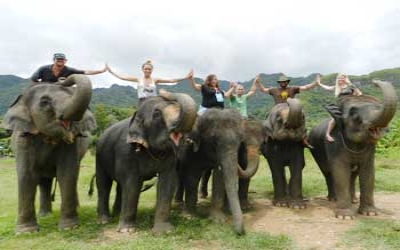 Tour Training Elephants