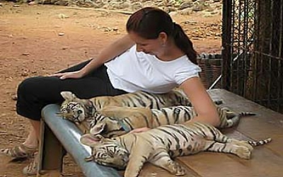 Lady With tiger temple thailand