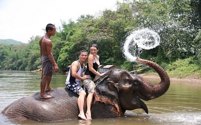 Swimming With Elephants Thailand Swimming With Elephants