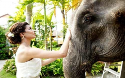 Getting to be friends with elephants