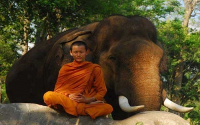 Elephant Monk mediation