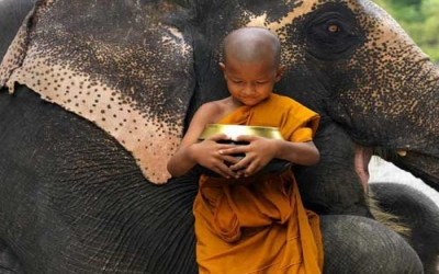 Elephant and novice Monk