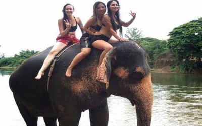 Taking Elephant for bathing