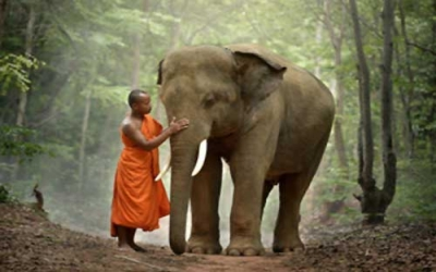 Monk meeting elephant