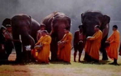Elephant giving food to Monks