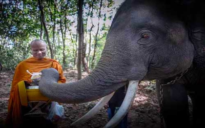 Elephant giving food to Monk