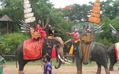 Elephant Demonstration Show